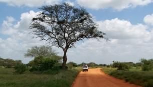 Savana Kenya