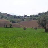 SantAntimo--campagna-1_1241615988