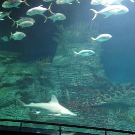 Oceanografic-02_1301903311