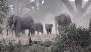 11- Amboseli