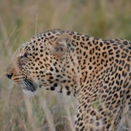 30- Masai Mara