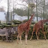 Artiz Zoo 06