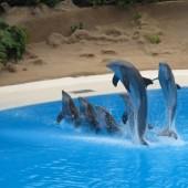 Delfini Loro Parque 40