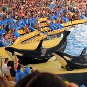 Orche Loro Parque 01
