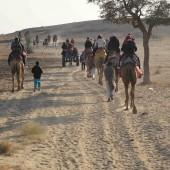 cammellata nel deserto del Thar