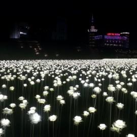 Seoul_20141011_201836