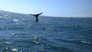 balene (31)