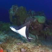 DSC_5060 Laguna di Chuuk