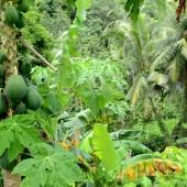 DSC_5498 Jungla di Pohnpei