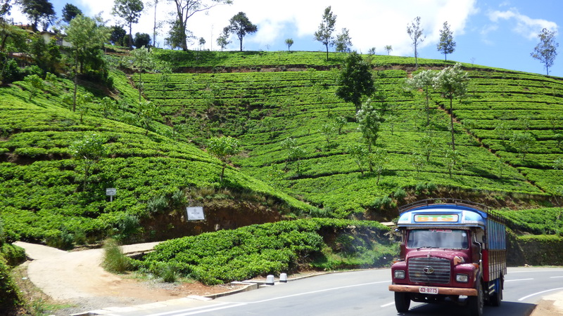 Sri Lanka_2015_234
