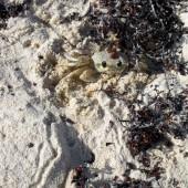 Granchio Playa Maroma 01
