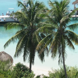 Isla Contoy 19
