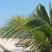 Spiaggia Playa Maroma 26