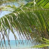 Spiaggia Playa Maroma 28