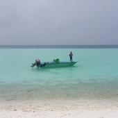 015 isola shells