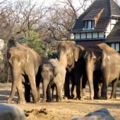Zoo Berlino 20