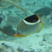 118-Le Meridien Bora Bora-Laguna Interna