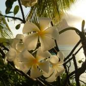 182-Le Meridien Bora Bora