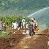 292-Lavoro nei campi