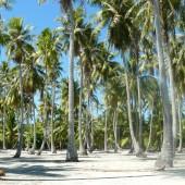44-Isola Deserta-Un giorno in paradiso