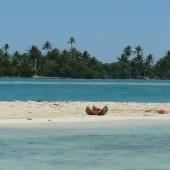 50-Isola Deserta-Un giorno in paradiso