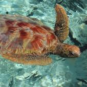 81-Le Meridien Bora Bora-Laguna esterna