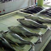 Malè fish