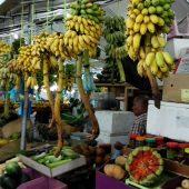 Malè fruit
