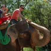 tuor elefante sri lanka tusoperator