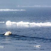 DSC_3691 Nanuk si fa una nuotata