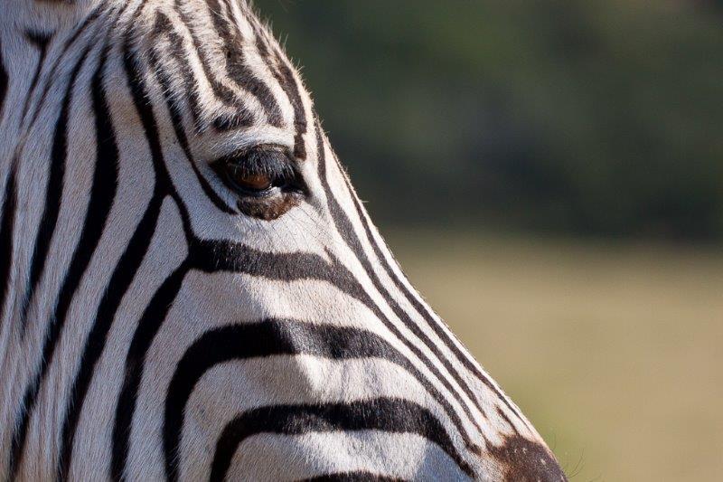 Sud Africa Agosto 2015 A Caccia Di Fari Ed Animali Diari Di Viaggio