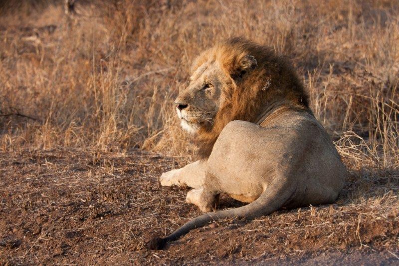 cuori solitari che risalgono Sud Africa