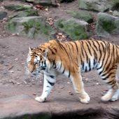 Zoo Norimberga 23