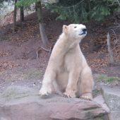 Zoo Norimberga 39