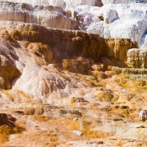 Canary Spring - Mammoth Hot Springs