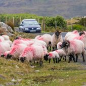 Ingorgo su Achill Island