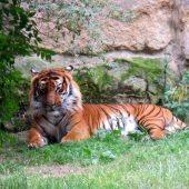 Zoo Praga 17