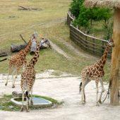 Zoo Praga 27