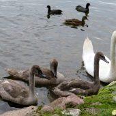 Lago Trakai 04