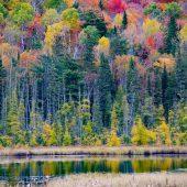 Algonquin Provincial Park -1