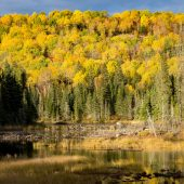 Algonquin Provincial Park -2