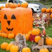 Halloween impazza nelle fattorie