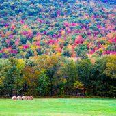 Paesaggio lungo la Vermont 125 Road