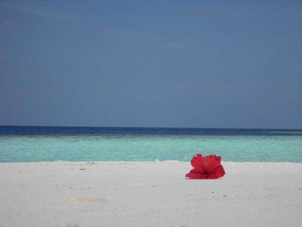 maldive_2010_477_2