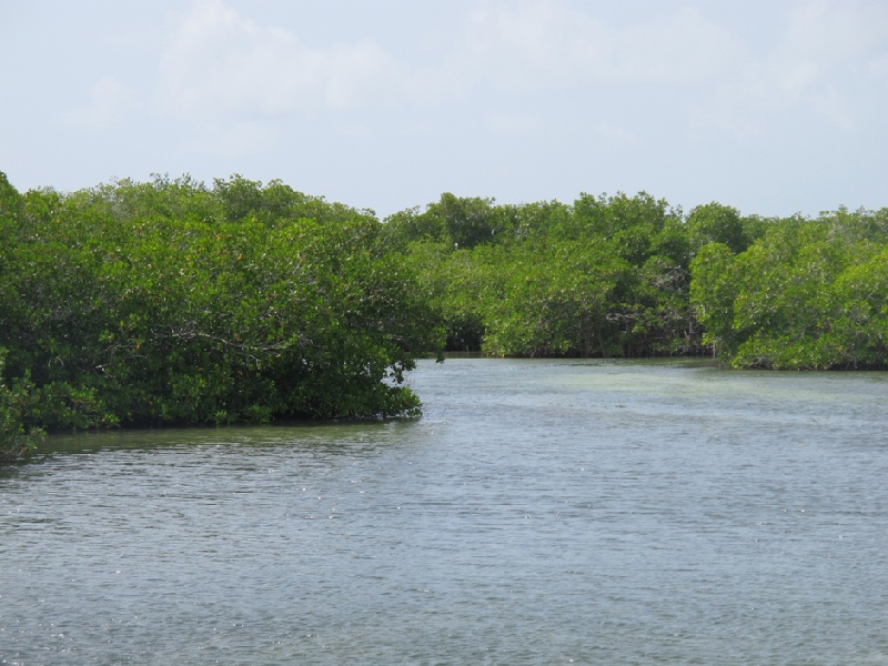 Mangrovie-Caraibi-05
