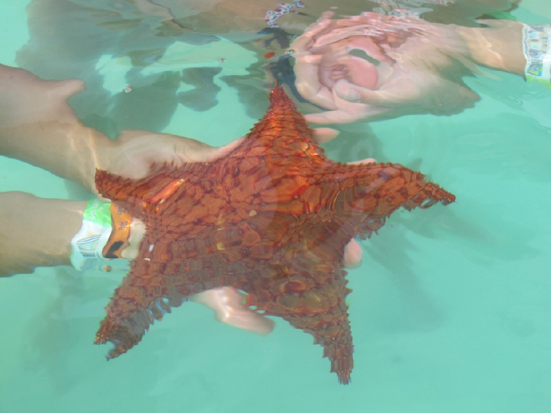 Stella-marina-piscine-naturali