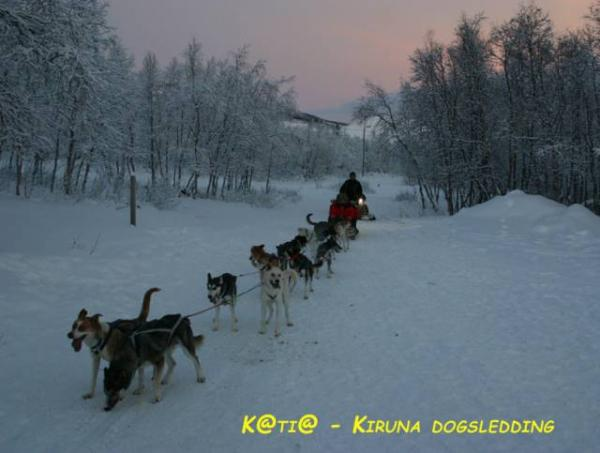 Kiruna-dogsledding