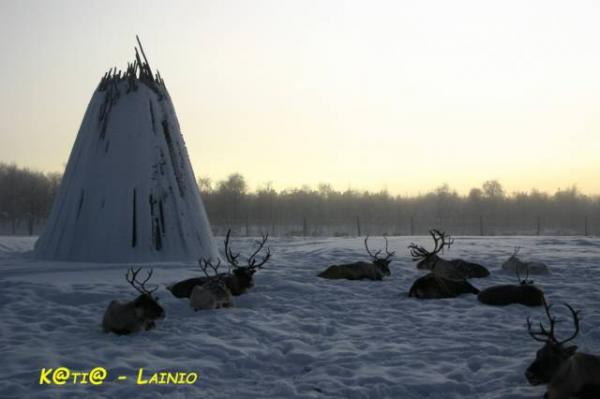 Lainio-renne-a-riposo
