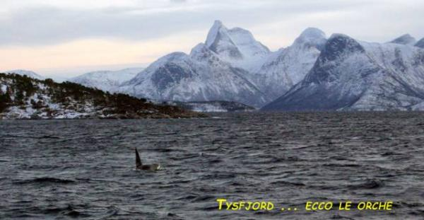 Tysfjord-05-Orche