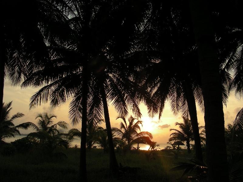 Isola-di-Bangaram---Palme-dava